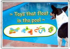 Puppy Love carries dog clothes, dog treats, dog beds, dog carriers, dog accessories & much more! We are family owned and have exclusive dog items! Pool Fun, Dog Games, Dog Store, Dog Boutique, Pool Toys, Dog Carrier, Cool Pools, Pool Ideas, Pet Stuff