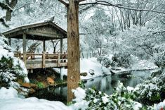 ★ Fort Worth - Japanese Gardens on a snowy day, February 11, 2010 (David Kozlowski)