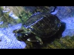 Want a pet turtle?  WATCH THIS FIRST!