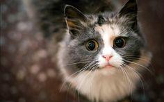 Cute cat by Reasondinn.deviantart.com on @DeviantArt
