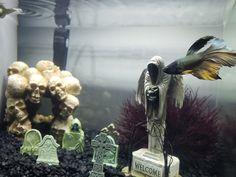 My fish is enjoying a halloween themed tank Aquariums, Scary Fish, Fish Tank Themes, Fish Tank Design, Cool Fish Tanks, Aquarium Landscape, Reptile Room, Betta Fish Tank, Pet Fish
