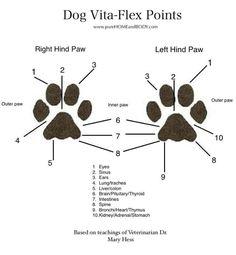 Dog Vita Flex points Young Living Essential Oils www.facebook.com/YLnatural