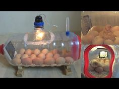 How To Make a Home Incubator Simple And Easy Backyard Chicken Coop Plans, Portable Chicken Coop, Chicken Garden, Building A Chicken Coop, Chickens Backyard, Homemade Incubator, Diy Incubator, Chicken Incubator, Raising Quail