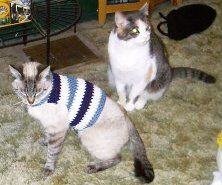 Easy Cat Sweater Crochet Pattern - Yes, I know it looks ridiculous, but cats get cold too.