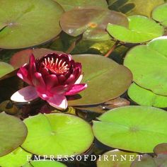 Advice for starting a new garden pond using a prefabricated pond form or installing a pond liner and recirculating pump. Garden Fountains Outdoor, Outdoor Ponds, Garden Ponds, Water Fountains, Koi Ponds, Herb Garden, Patio Pond, Pond Landscaping, Landscaping With Rocks