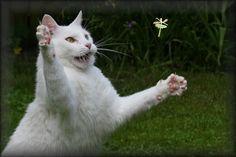 Ketching me a fairy!!  (via  moinichbins)