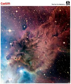 The Fox Fur Nebula. The characteristic blue glow on the left is dust reflecting light from the bright star S Mon, just beyond the left edge of the image. Mottled pink and brown areas are a combination of the cosmic dust and reddish emission from ionized hydrogen gas. S Mon is part of a young open cluster of stars, NGC 2264, located about 2,500 light years away toward the constellation of Monoceros, just north of the Cone Nebula.