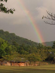 春日野園地から見た虹2