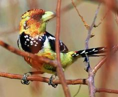 COLORS by peo pea, via Flickr  from Kruger Wildlife Reserve,  South Africa.|uccellino |