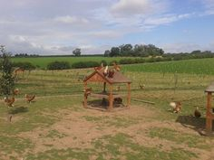 A great photo from one of our #happyeggs farmers of his girls out enjoying their playhouse   http://thehappyegg.co.uk