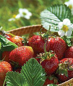 A little fruit for the veggie garden
