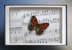 Vintage Music Paper With Real Peacock Butterfly Insect Art Display . by ButterfliesArtist on Etsy