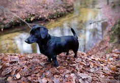 https://flic.kr/p/Pf9Uyf | Hund im Wald