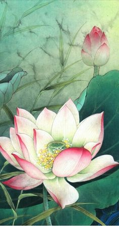 Art Floral, Watercolor Flowers, Watercolor Paintings, Korean Painting, Chinese Painting, Chinese Art, Lotus Painting, Silk Painting, Japanese Flowers