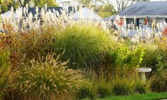 Ornamental grasses for texture and for winter interest.