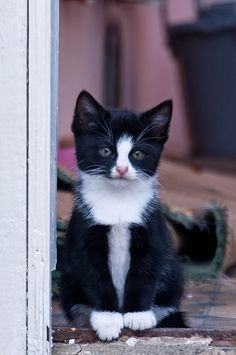 Black and white Adorable kitten