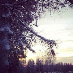 #lehtikuusi #auringonlasku  #sunset #keskelläpäivää #jouluaatto