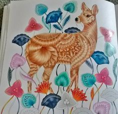 Coloring Tips Adult Books Water Deer Curious Creatures Animal Kingdom Color Inspiration Palettes Favorite