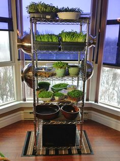 How to Grow Micro Greens At Home