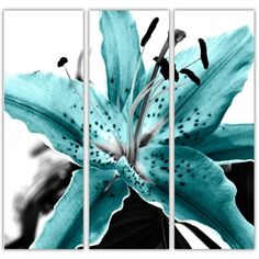 The Lily Collection Teal Tryptch  Lily tryptch canvas prints in Teal, black and white. Original photograph taken by Lucy Art graphic artist John Goddard. Floral canvas art work, EXCLUSIVE TO LUCY ART YOU WILL NOT SEE ANYWHERE ELSE.