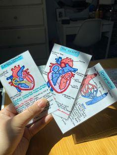 Study Flashcards, Study Cards, School Organization Notes, Nursing School Notes, Science Notes, School Study Tips, Study Skills, Study Notes, Study Motivation