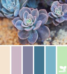 Succulent spring color palette To help you get started, we've selected ten gorgeous color schemes from the amazing Design Seeds website. These might be just what you need for your spring designs! Spring Color Palette, Colour Pallette, Color Palate, Spring Colors, Color Scheme Design, Colour Schemes, Color Combos, Color Patterns, Blue Design