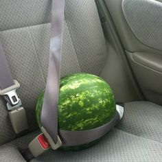 bringing home baby-The day Sara and Kevin brought me a watermelon.