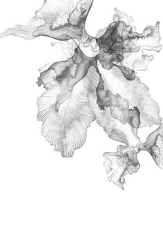 Digital Texture, Oil Painting Techniques, Background Design Vector, Eye Art, Art Tutorials, Art Pictures, Flower Art, Vector Art, Watercolor Paintings