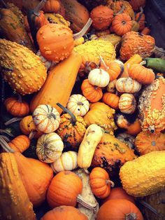 pumpkins - all shapes, sizes and colors