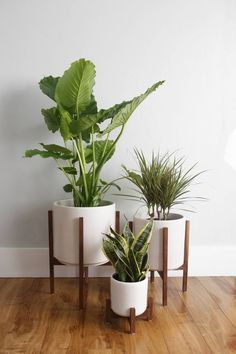 Mid Century Modern Planter, Plant Stand, Ceramic Plant Pot and Solid Wood Stand . - Mid Century Modern Planter, Plant Stand, Ceramic Plant Pot and Solid Wood Stand – 10 Indoor Plant - Pinturas Art Deco, Indoor Plant Pots, Pots For Plants, Outdoor Potted Plants, Indoor Floor Plants, Indoor Plant Stands, Green Plants, Tall Potted Plants