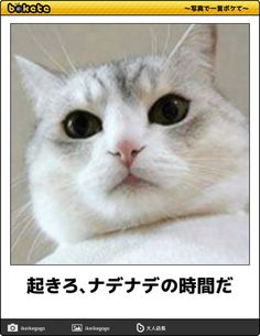 Funny Cat Photos, Funny Pictures, Animals And Pets, Cute Animals, Neko Cat, Animal 2, Cute Animal Pictures, Funny Moments, Funny Cute
