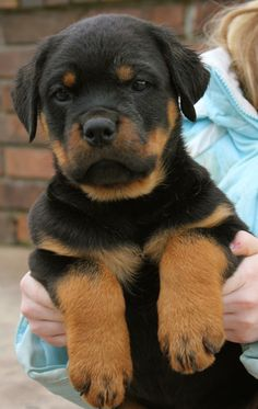 Click visit site and Check out Best Rottweiler T-shirts. This website is outstanding. Tip: You can search your name or your favorite shirts at search bar on the top.