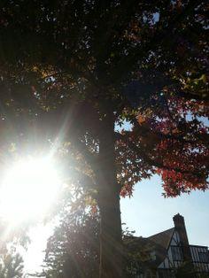 (7) autumn: Mega-Editor