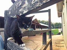 Barn cat on the prowl. (2014)