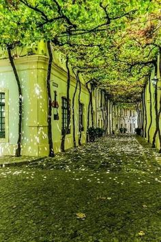 Seville, Spain Source by Beautiful Streets, Beautiful World, Beautiful Places, Places To Travel, Places To See, Outdoor Walkway, Patio, Secret Places, Belle Photo