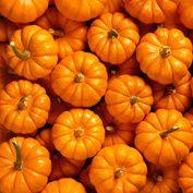 Gluten-Free pumpkin treats. Yummy!