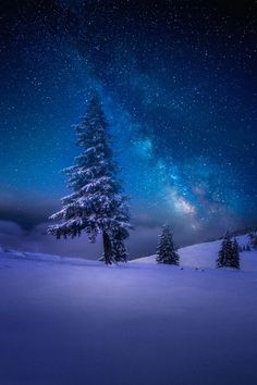 xglan on tumblr:  WinterStar ©xGlan