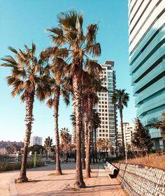 Summer Vibes, Palm Trees, Barcelona, Spain, Happy, Plants, Instagram, Palm Plants, Sevilla Spain