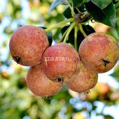 Busuioace cu miez roşu | Zdravăn Paradis, Plum, Peach, Apple, Green, Plant, Apple Fruit, Peaches, Apples
