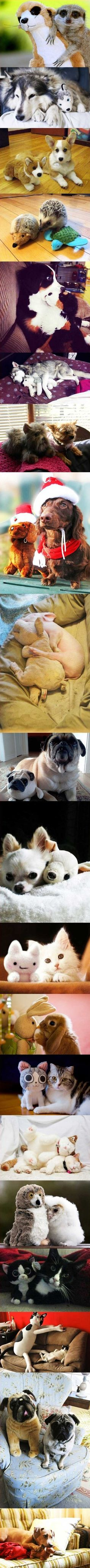 Animals and their stuffed friends. I need to get Einstein a stuffed toy like this <3