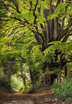 tree between slad and juniper hill by photographer robert wolstenholme