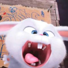 Snowball the little white bunny is so cute it kills. The
