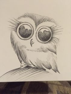 Little owl sketch