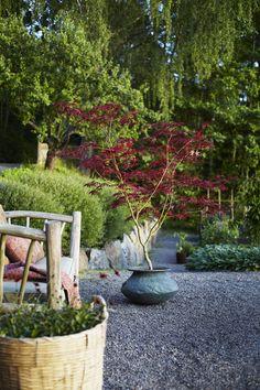 43 Best Summer Planter Ideas to Beautify Your Home Small Garden Arbour, Sloped Garden, Garden Arbor, Garden Trees, Terrace Garden, Garden Paths, Inexpensive Backyard Ideas, Bushes And Shrubs, Pot Plante