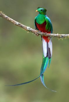 28 Dazzling Exotic Birds You Probably Never Heard Of Resplendent Quetzal