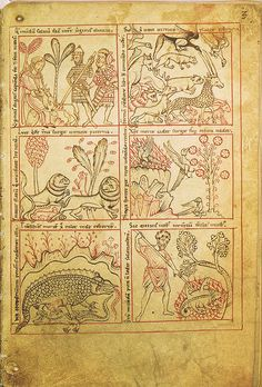 Reiner Musterbuch - The hunt of the unicorn by petrus.agricola, via Flickr