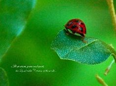 All creatures great and small, the Lord is Creator of them all...