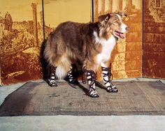 The only way I like gladiator sandals -- on a furry friend
