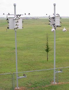Purple Martin Birdhouse Poles - Anderson.cc