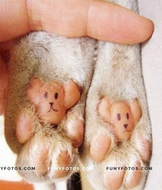 Every cat has cute bear paws - Click Here to view in larger Resolutions  http://funyfotos.com/funny-photos/every-cat-has-cute-bear-paws/
